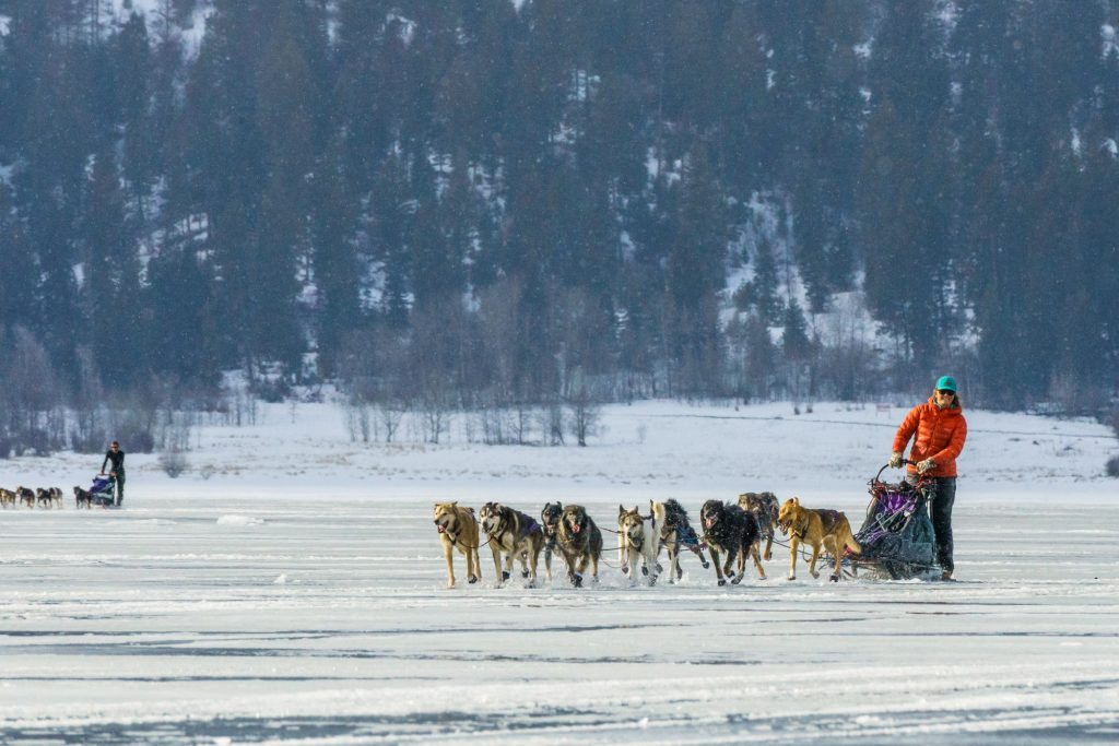 Crossing Lake Cascade in the Idaho Sled Dog Challenge 2018