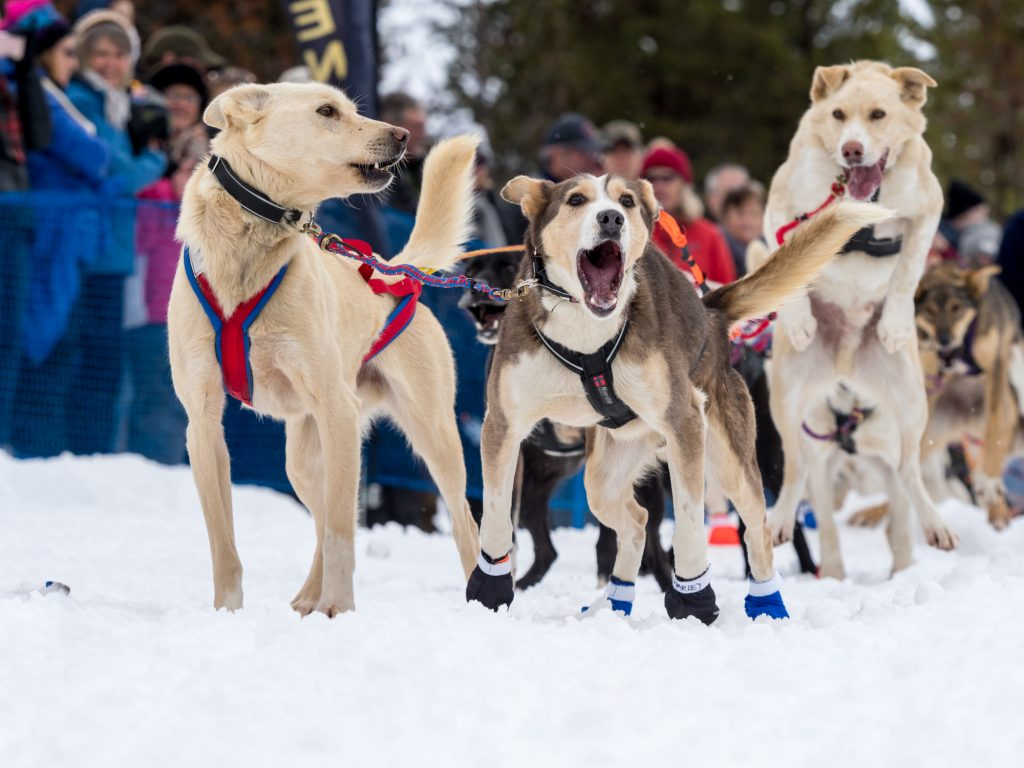 Official Race Start 2018 Idaho Sled Dog Challenge