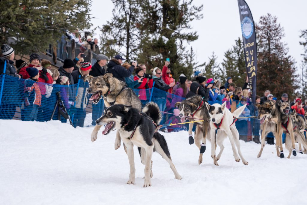Start of the Idaho Sled Dog Challenge at Bear Creek Lodge during McCall Winter Carnival