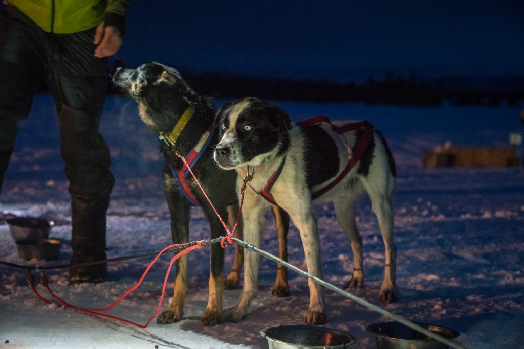 idaho-sled-dog-challenge-mccall-idaho-mushing-visit-idaho