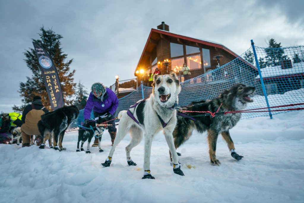 idaho sled dog challenge video