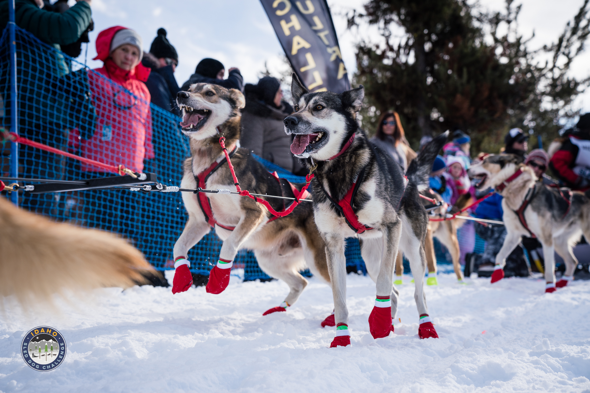 Idaho Sled Dog Challenge – McCall – New Meadows – Donnelly