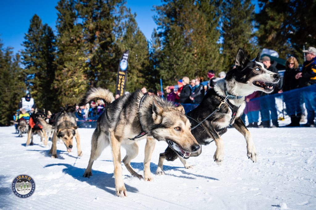 Ceremonial start of the 2019 Idaho Sled Dog Challenge in Ponderosa State Park, McCall, Idaho