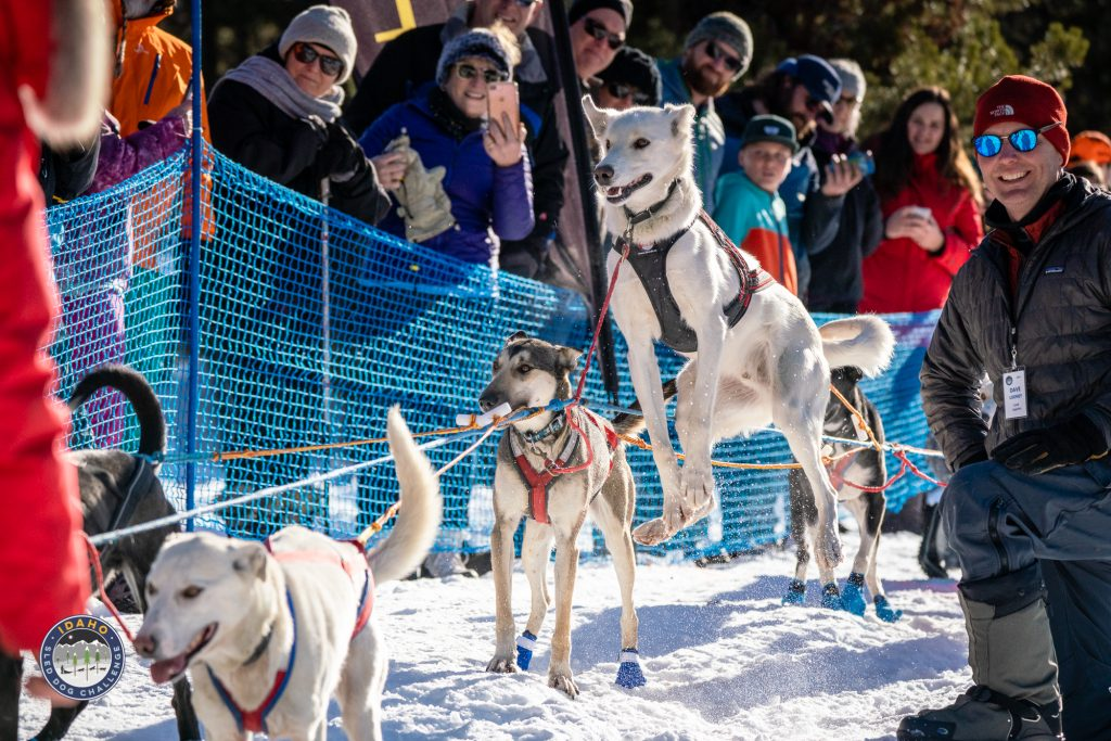 150 mile race start of the Idaho Sled Dog Challenge at Bear Creek Lodge in McCall, Idaho