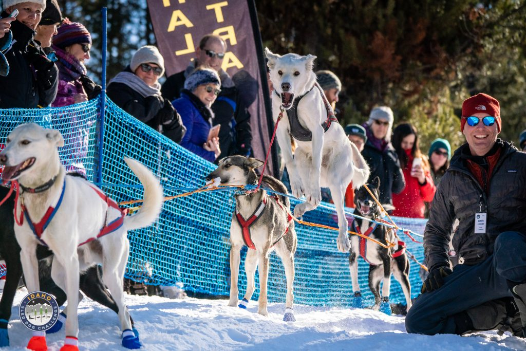 150 Mile Race Start of the 2019 Idaho Sled Dog Challenge at the Bear Creek Lodge in McCall Idaho