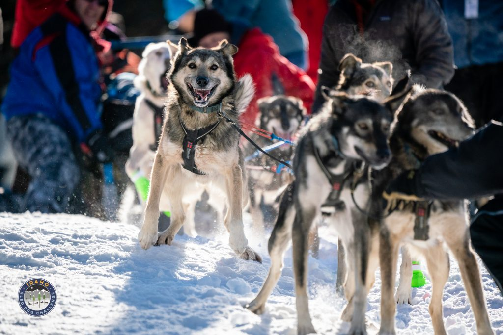150 Mile Race Start in the 2019 Idaho sled dog Challenge race