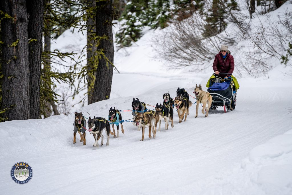 2019 Idaho Sled Dog Challenge views from the trail